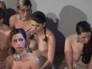 spanked, meitene, ēzelis