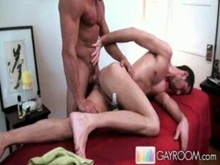 liels, gailis, homoseksuāls