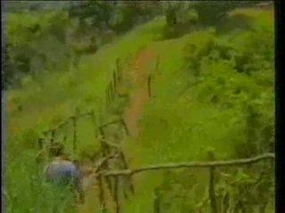 wijnoogst, afrikaanse, ebbehout