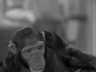 Tarzans baru york adventure (1942)
