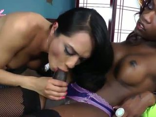 real shemale nice, hq interacial hot, all tranny you