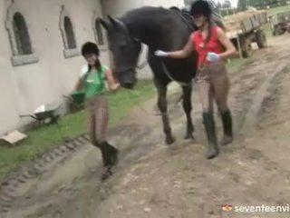 לסבית שנתי העשרה של בפנים the stable